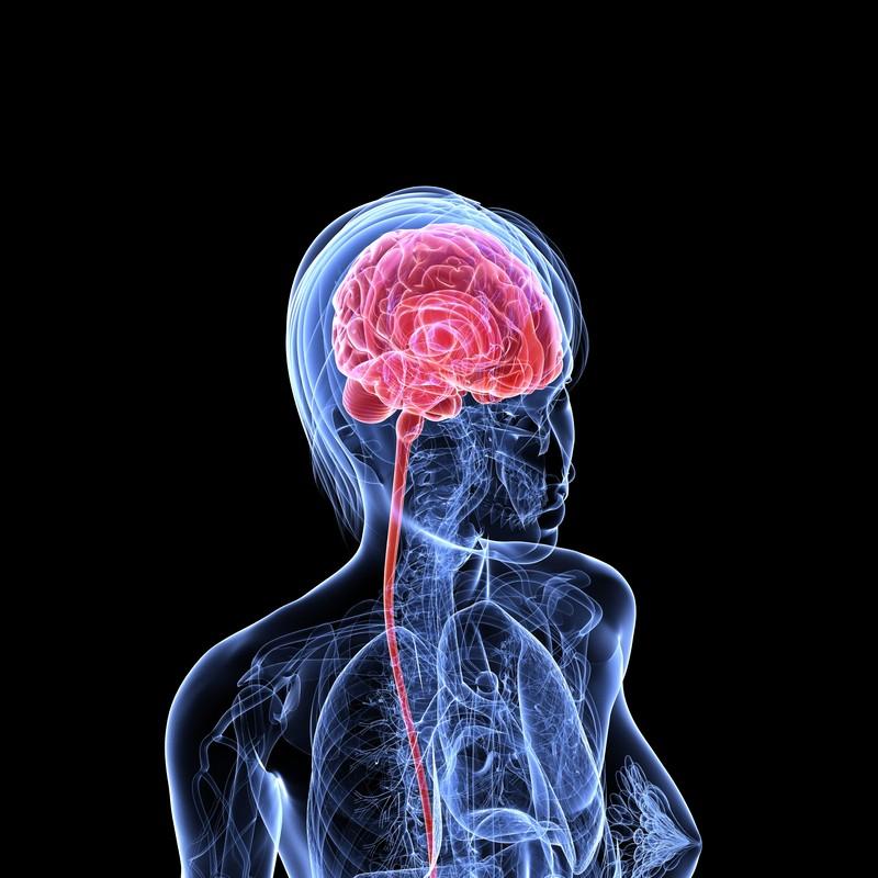 Improvement in brain functions