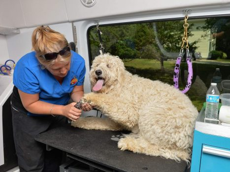 mobile pet grooming near me